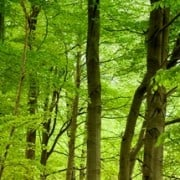 30 Years of Forest Protection