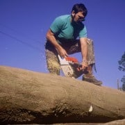 The Story Behind Florida's Deadhead Logging Permit 2