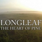 Longleaf: The Heart of Pine 2