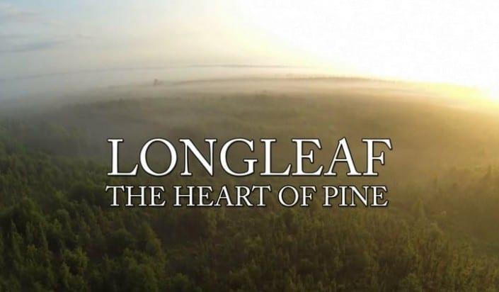 Longleaf: The Heart of Pine 2