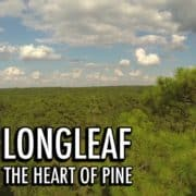 Longleaf: the Heart of Pine